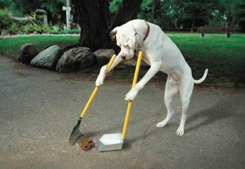 The Winner at Dog Training School