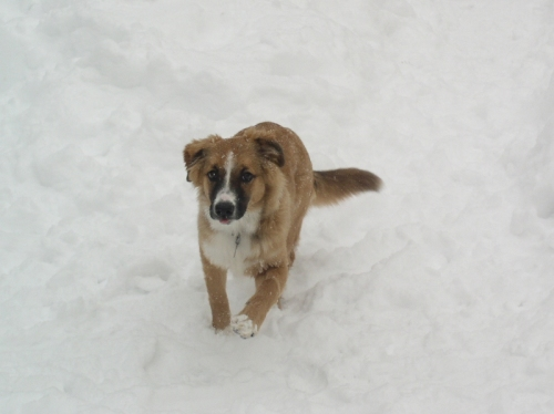 zoe-snowdog2