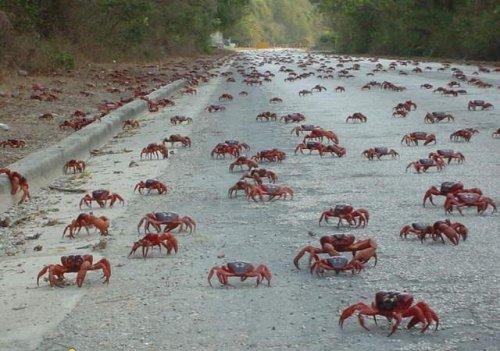 crab_attack_5