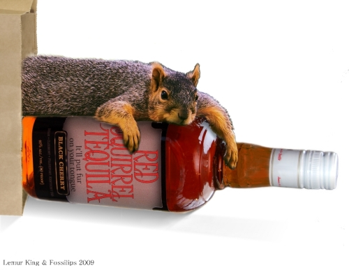 squirrel drunk_small