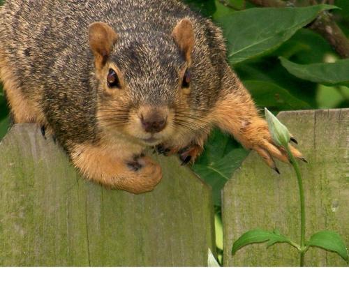 squirrel-crop