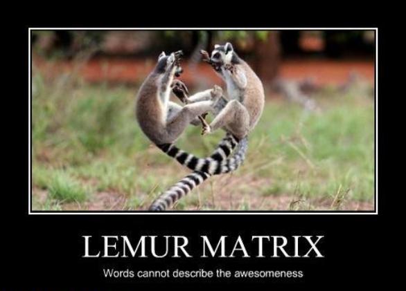 lemur matrix roundup lemur king's folly