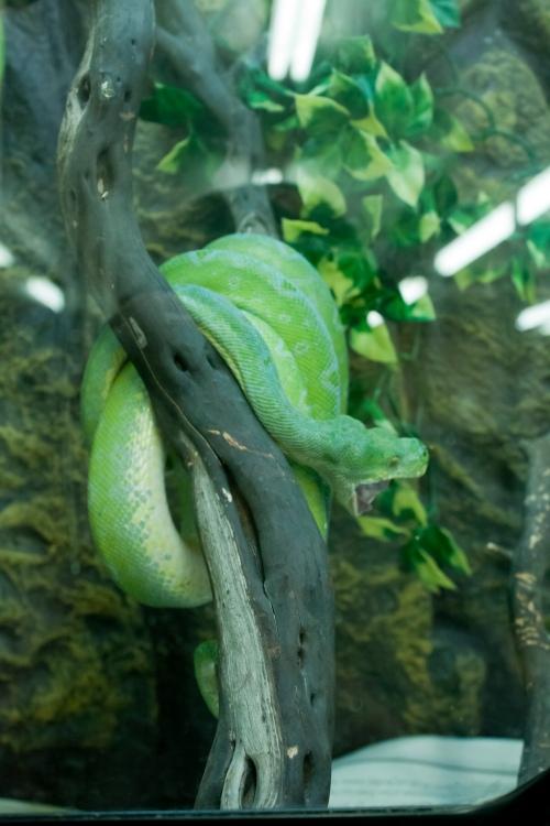 Verdi-Snake-Texas-081613