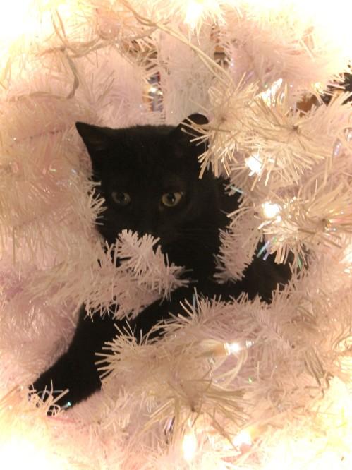 Merry Catsmus-2